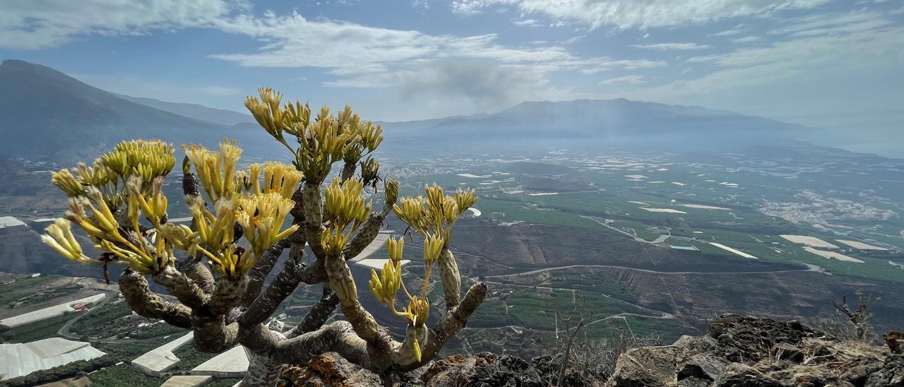 El plan extraordinario de empleo se vuelca en la formación y en rehabilitar el entorno dañado por el volcán de La Palma