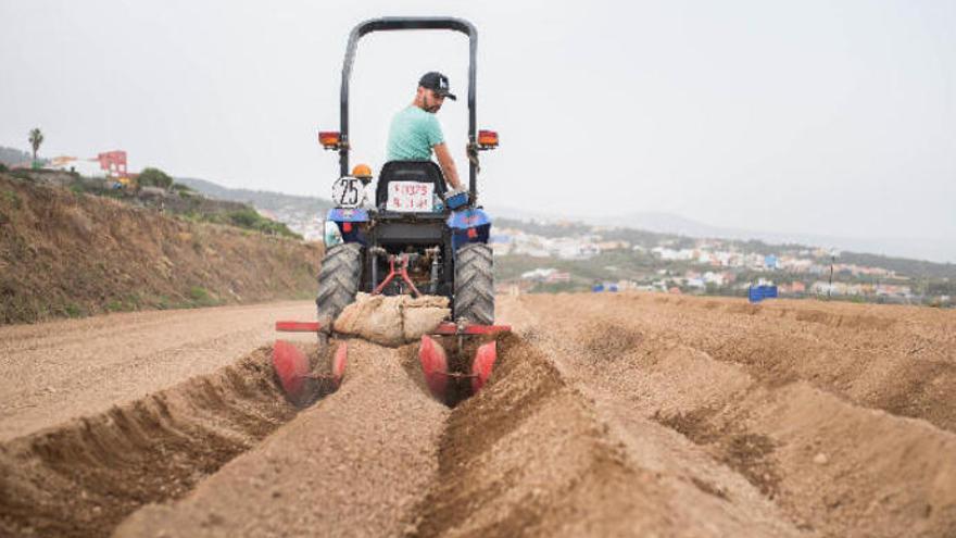 La UE acepta mantener la asignación del POSEI a la agricultura canaria
