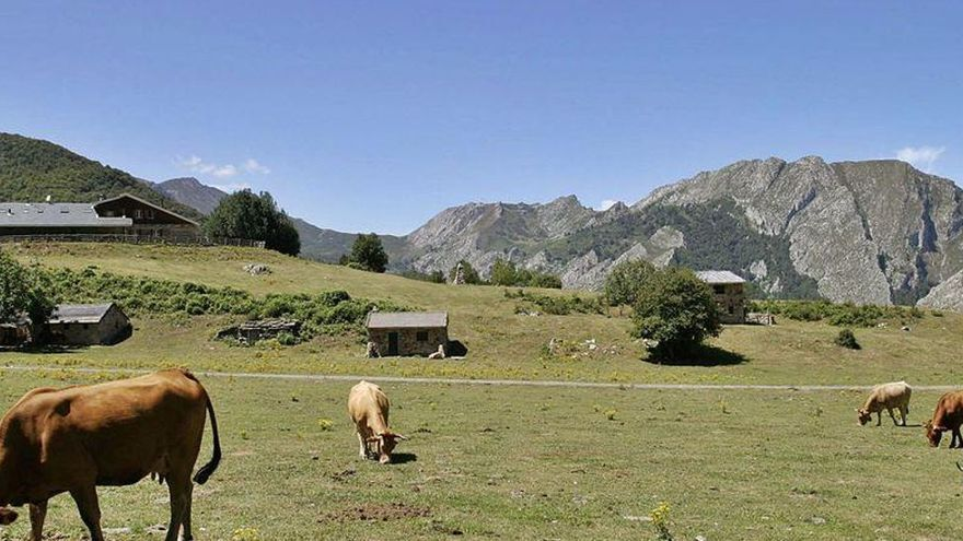 El Principado acumula más de un millón de euros en impagos de daños de fauna salvaje