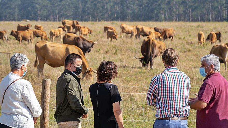 Pinzás geolocaliza sus vacas vianesas