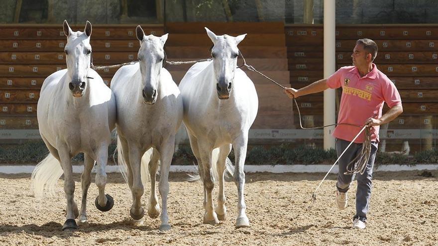 Cabalcor comienza mañana con récord de participantes en ganaderías y limitación de aforo