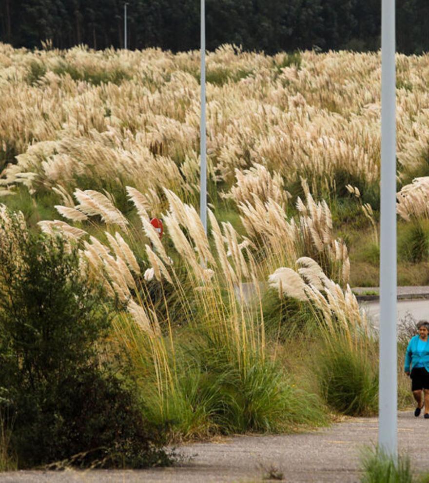 Descubiertas las claves del éxito de las plantas invasoras en Europa
