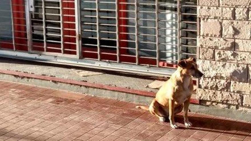 Bianca, la perra que lleva días esperando a su dueña fallecida frente a su librería