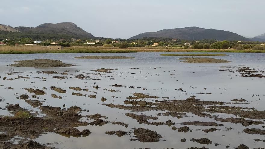 La Reserva Natural de s'Albufereta construye siete nuevas isletas para facilitar la cría de aves acuáticas