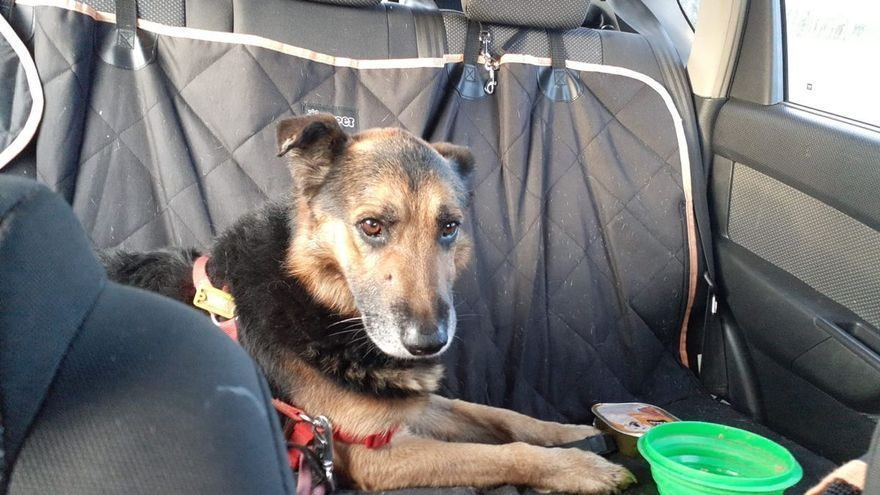 """Una odisea canina con final feliz: """"Filo"""", el perro de Arcelor, vuelve a casa"""