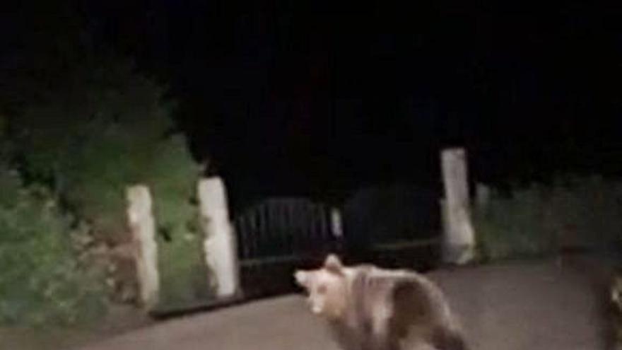 """Los osos rondan los pueblos de Lena y los vecinos exigen """"controlarlos"""""""