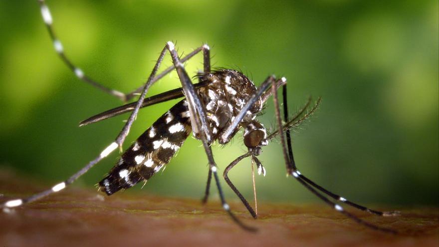 La crisis climática expone Europa al mosquito de la malaria