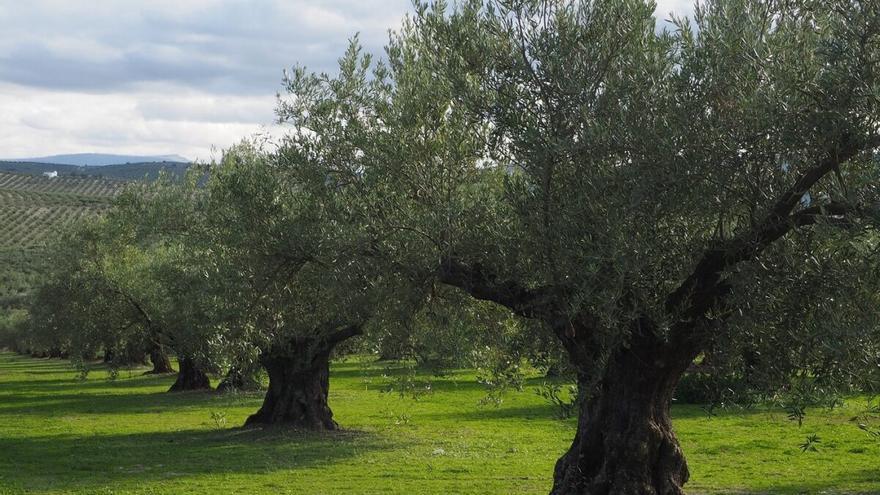 El olivar como tesoro ecológico: 114 especies de aves en una sola finca