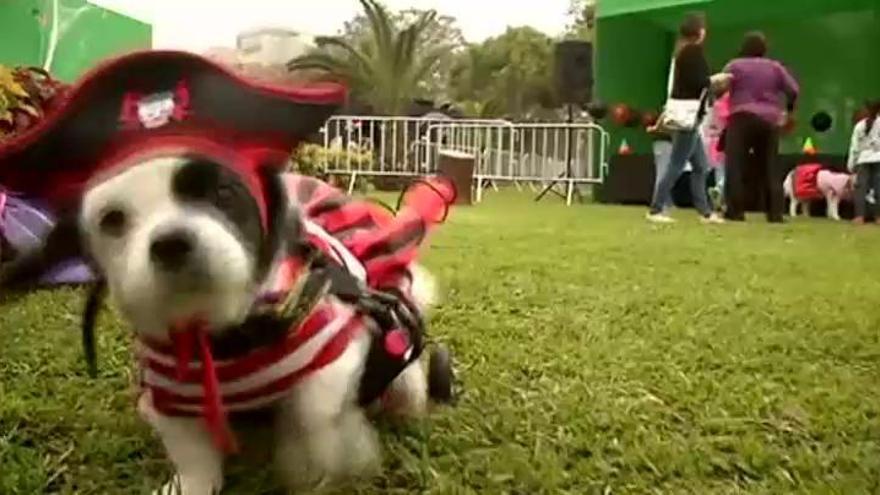 El Halloween más canino