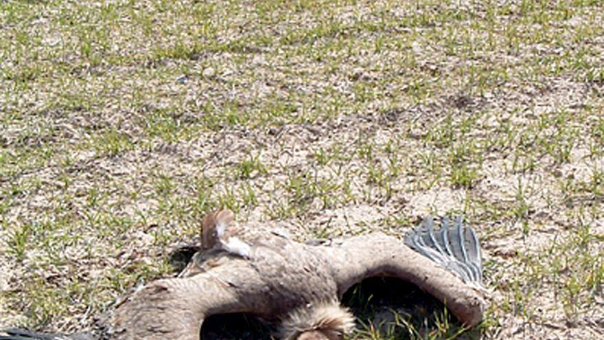 La Junta cierra en el último año tres cotos de caza por la aparición de animales envenenados