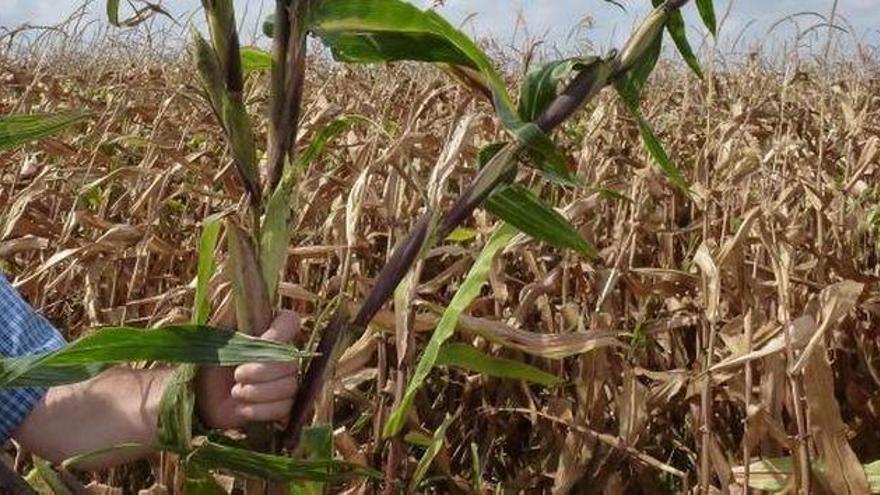 Convocadas las ayudas para sufragar la contratación de seguros agrarios