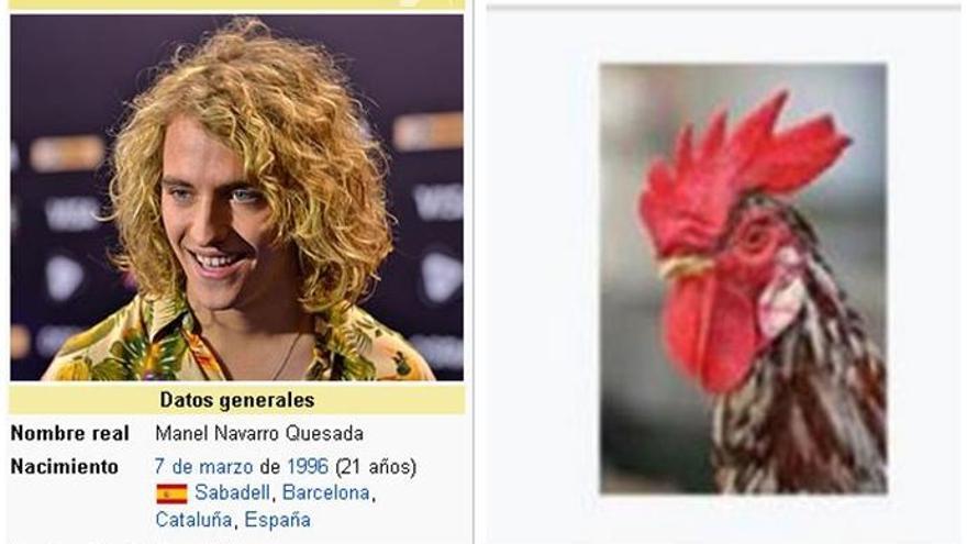 Cambian la foto de Manel Navarro por un gallo en la Wikipedia