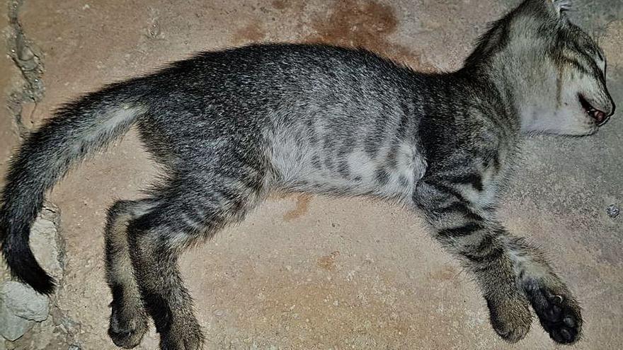 Animalistas denuncian la matanza cruel de unos sesenta gatos en La Hoya