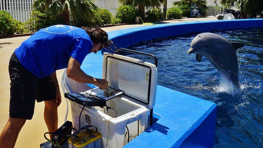 """Com eviten els dofins el """"mal del bussejador"""" després d'una immersió?"""