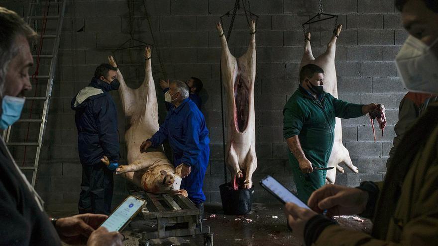 """La tradición que resiste al COVID y la despoblación: """"Outros anos na matanza eramos 20 a comer, este 6"""""""
