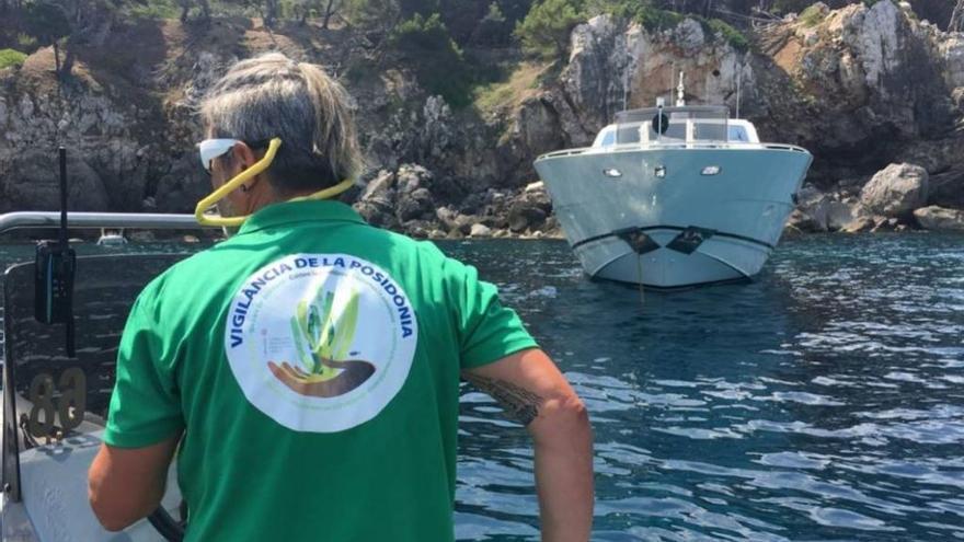 8.504 Boote schadeten mit ihren Ankern Seegraswiesen