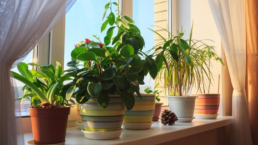 El producto casero para cuidar las plantas y que sus hojas brillen con un solo un gesto