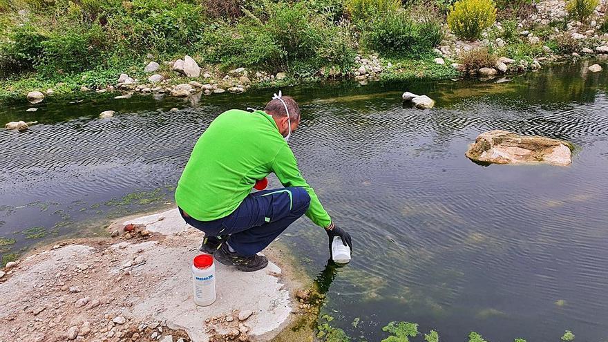 La aparición de peces muertos aflora la contaminación fecal en el  Pas del Regadiu de Moixent