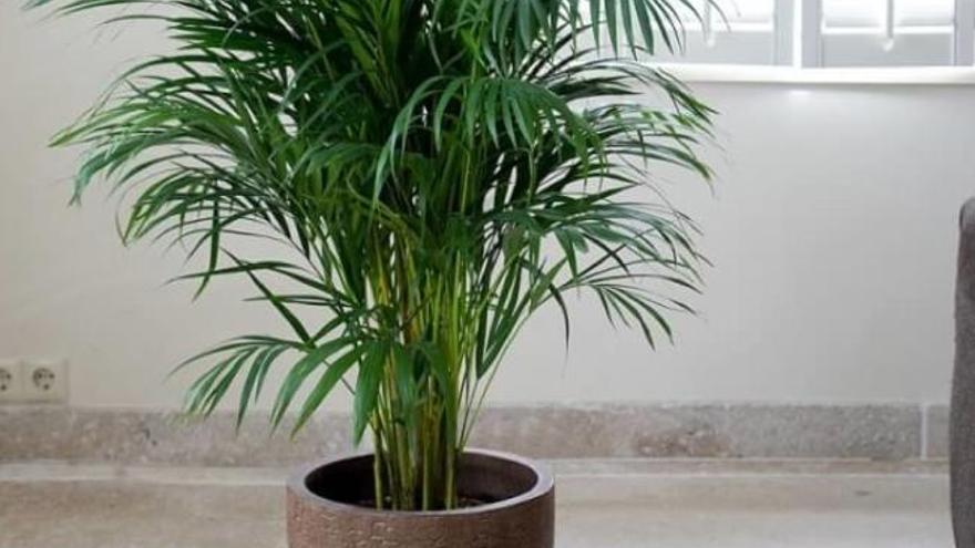 Les plantes d'interior  prenen protagonisme
