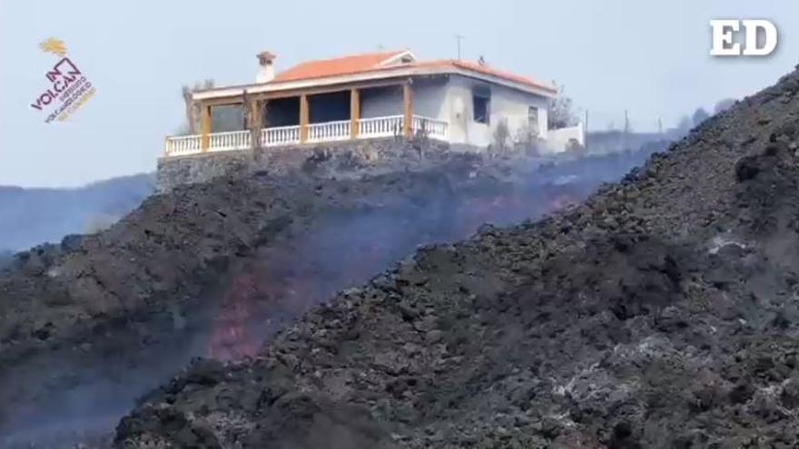 Un 'arca de Noé' para preservar las semillas de La Palma del volcán