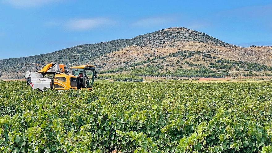 La vendimia caerá en Aragón un 16% pero con una calidad de uva excelente