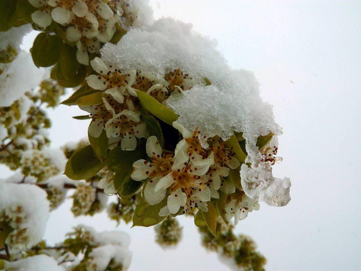 La nieve en primavera