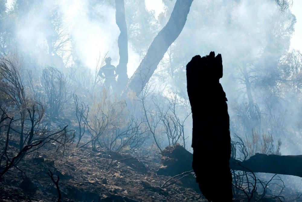 El fuego se inició a última hora de ayer miércoles y ha estado activo toda la noche.