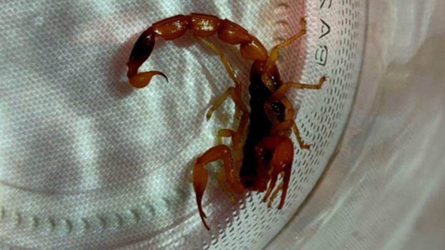 Atacada por un escorpión al abrir un bolso comprado en China a través de internet