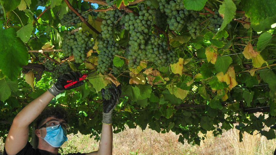 El futuro de la viticultura, a debate en Ribadumia
