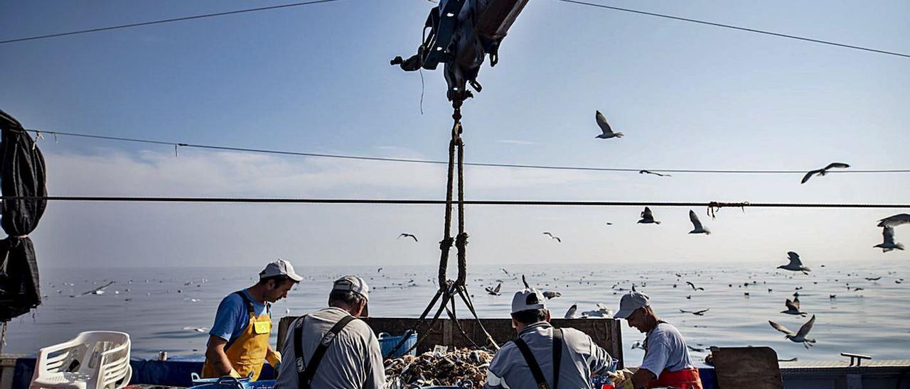 Un grupo de pescadores trabajando sobre una embarcación situada en mar abierto. | LEVANTE-EMV