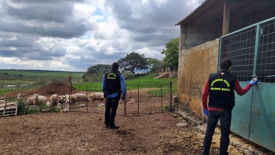 Cada día se denuncian de media  dos robos en explotaciones agrarias extremeñas
