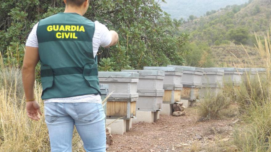 Roban 12 colmenas valoradas en 1.200 euros de una explotación apícola en Lorca