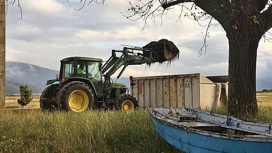 La UVigo avala el sistema de recogida de las algas en las playas de Redondela