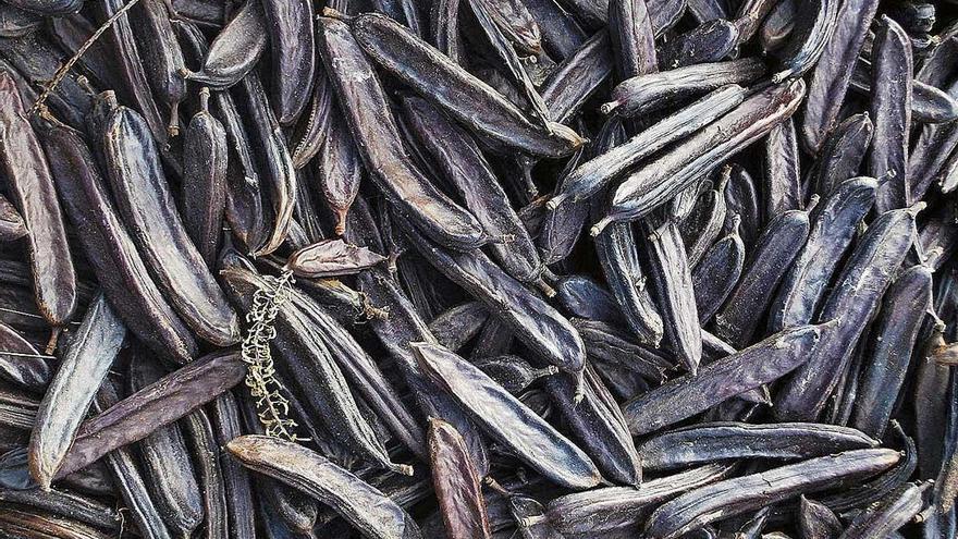 El alto precio de las algarrobas dispara los robos en muchas plantaciones