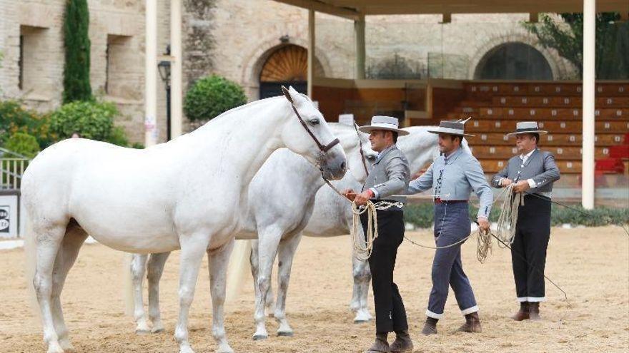 El Ayuntamiento de Córdoba promociona Córdoba como capital del mundo del caballo