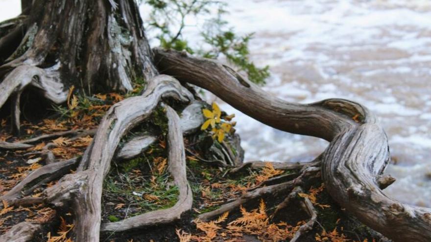 Una red cooperativa salva a los árboles