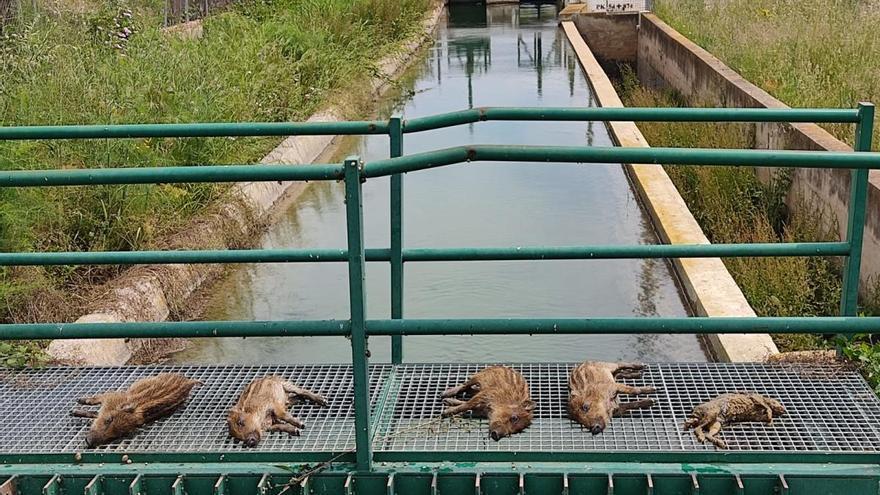 Llamamiento para que se ponga fin a la muerte en el Canal de Lliria