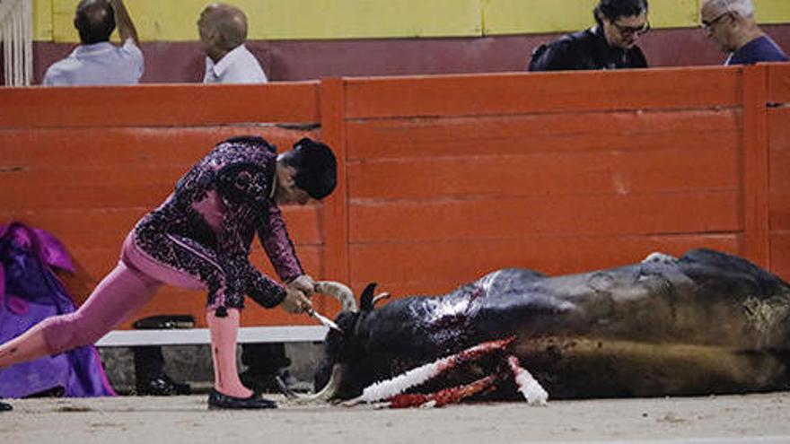 Stiere auf Mallorca müssen wieder bluten und sterben