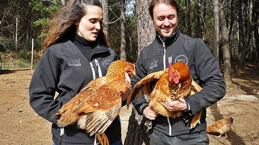 Galo Celta investiga las propiedades del bagazo de Estrella Galicia como alimento para sus aves