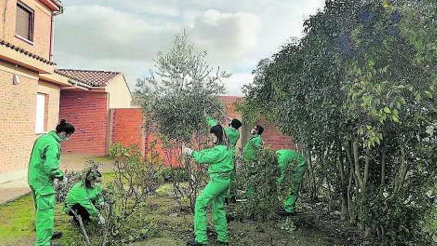 Moraleja del Vino forma a doce jóvenes parados en labores de jardinería