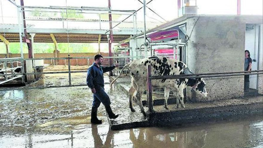 Nuevas tecnologías al servicio del sector bovino del Tera
