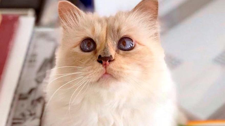 La emotiva carta de la gata Choupette a su papá Karl Lagerfeld
