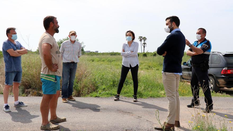 Inician de forma experimental el cultivo de chufa en Sagunt