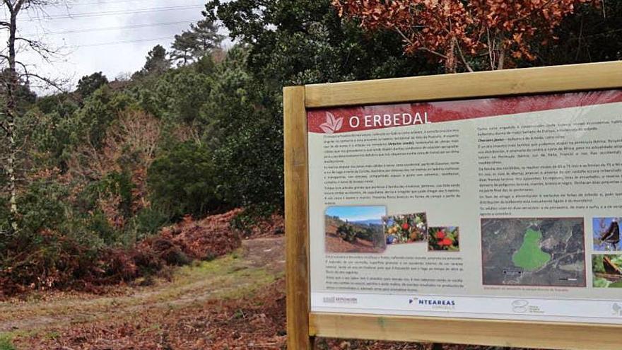 Concello y Diputación ponen en valor el madroño del parque forestal de A Picaraña