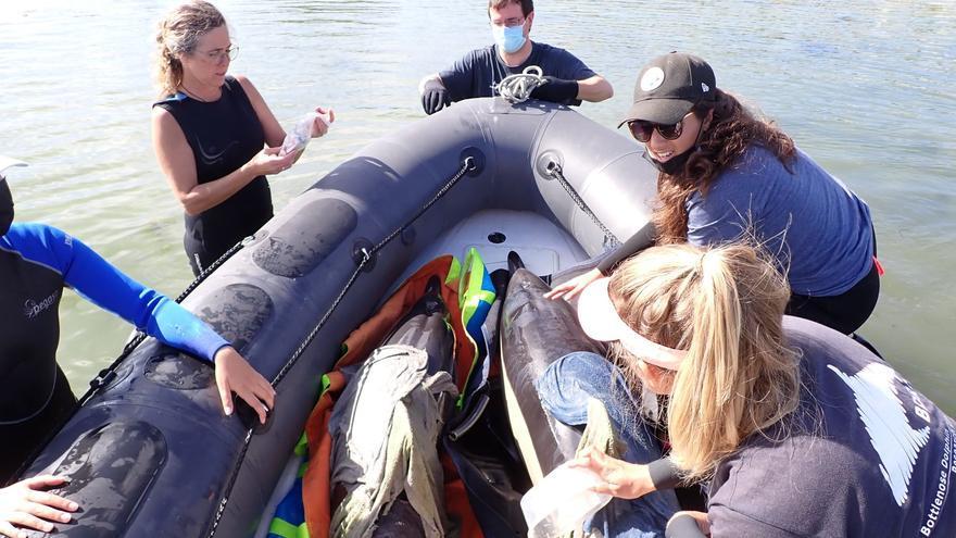 """Una delfín hembra y su cría, salvadas """"in extremis"""" en A Toxa"""
