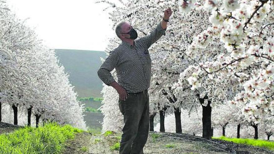 Frutos secos para mejorar el clima