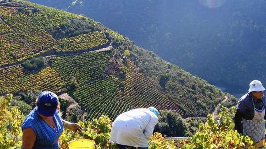La DO Ribeira Sacra podrá producir vinos rosados y sumar más superficie