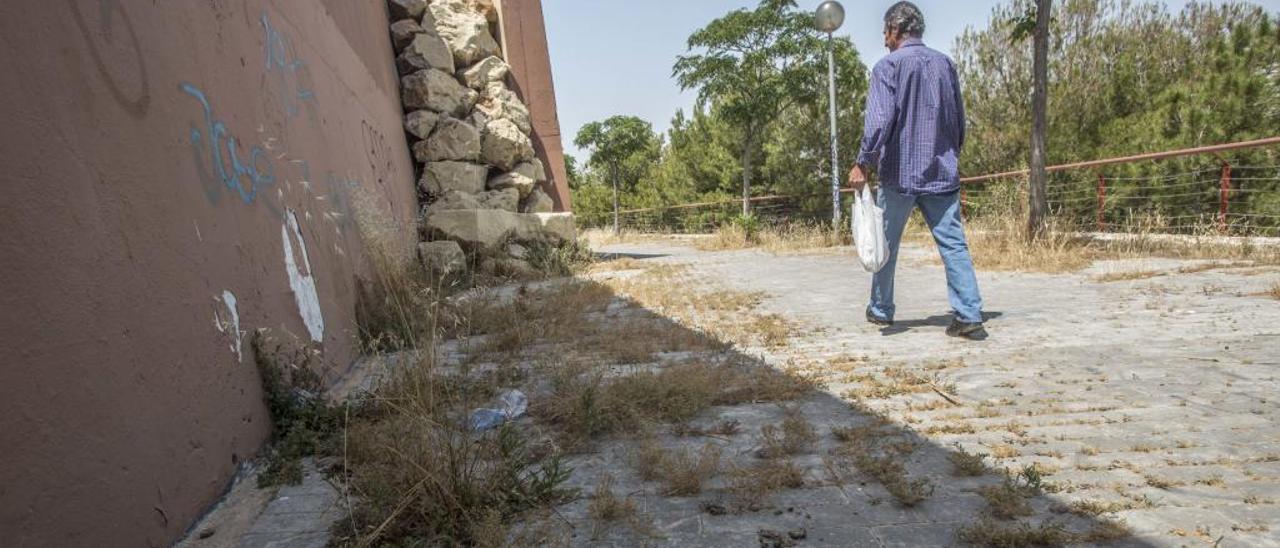 Una invasión de matojos se abre paso por los caminos de esta parte del monte Benacantil.