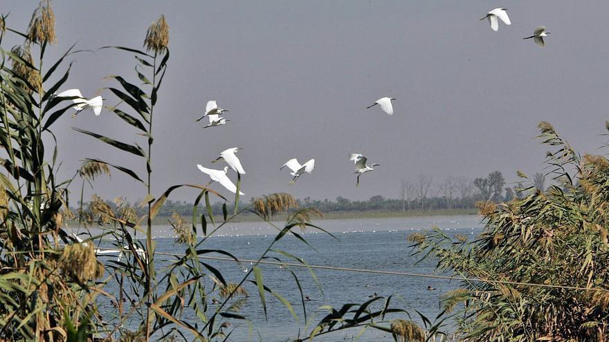 El Hondo pide soluciones ante atropellos de aves, nutrias y otras especies protegidas