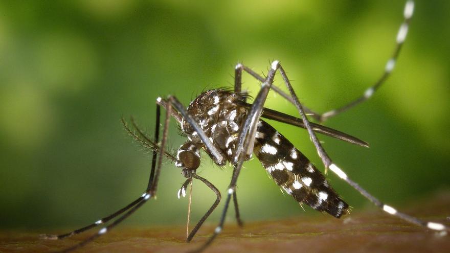 Salut confirma dos casos més de virus del Nil a Andalusia, tots dos a Sevilla